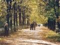 Осень на липовой аллее на Проспекте Ленина, 1990-е годы