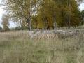 Деревья и фундаменты домов - все, что осталось от Бережной улицы, 2003 год
