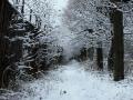 Первый снег на аллее, которая проходит параллельно улице Дачной по периметру садового товарищества, 2007 год