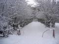 Улица Дачная, после первого снегопада, 2005 год