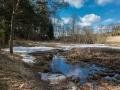 Красноармейск, в лесу в окрестностях Балсунихи, апрель 2015 года