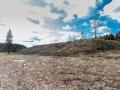 Красноармейск, в лесу в окрестностях Балсунихи, апрель 2015 годаКрасноармейск, в лесу в окрестностях Балсунихи, апрель 2015 года