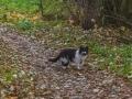 Кот с улицы Чкалова, Красноармейск, октябрь 2015 года