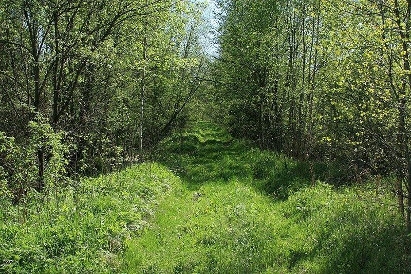 Здесь проходил путь УЖД на болото