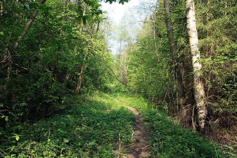 Здесь проходили пути УЖД, окрестности деревни Григорово