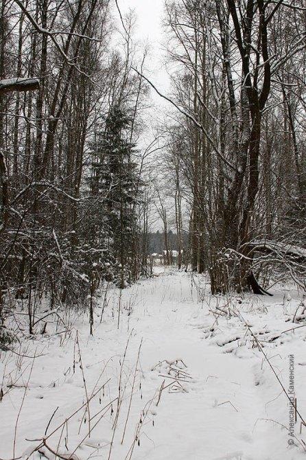 Здесь проходили пути УЖД, окрестности Федоровского