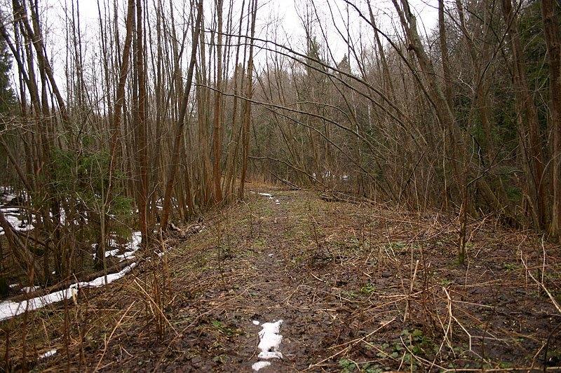 Здесь проходили пути УЖД, окрестности садов на Подсобном