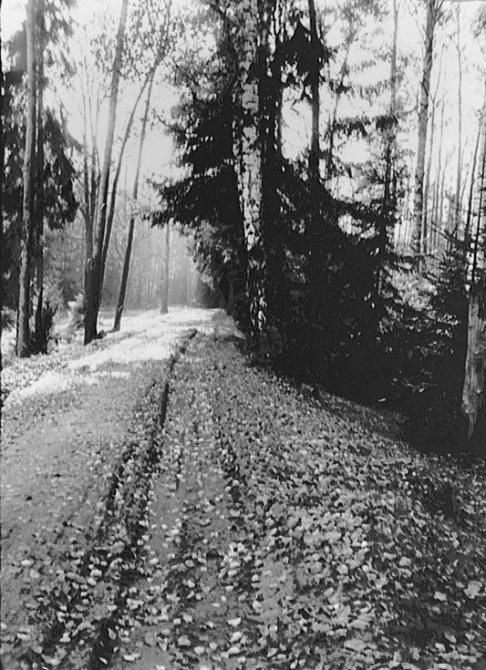 Здесь проходили пути УЖД, дорога, ведущая к мосту около Пирожной горы